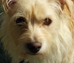 kleiner Hund im Einzeltraining Portrait