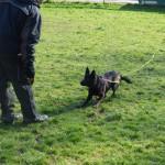 Hund und Halter üben mit Schleppleine
