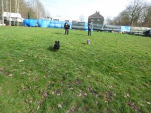 Freilauf am Parcour Hunde laufen zu Haltern