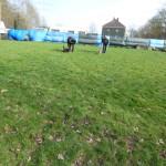 Freilauf am Parcour Hunde laufen auf der Wiese