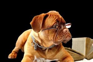 Hund Lehrer Trainer