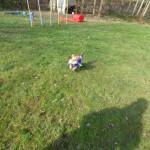 Einzeltraining statt Hundeschule:Hund Hund rennt Einzeltraining