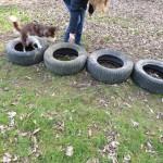 Parcour Hund klettert über Autoreifen