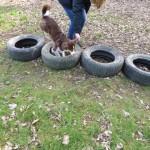 Hund läuft über Autoreifen Parcour