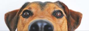 Hund schaut neugierig Gästebuch