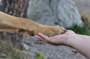 Hund gibt Hand