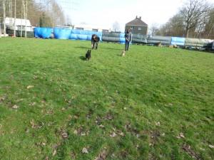 Freilauf am Parcour Hunde und Halter