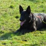 Einzeltraining statt Hundeschule: Hund liegt und wartet