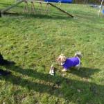 Einzeltraining statt Hundeschule:Hund Hund aportiert im Einzeltraining